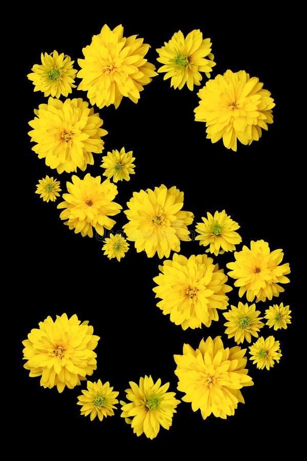 I germogli del fiore giallo di Heliopsis sono allineati con la lettera S fotografia stock