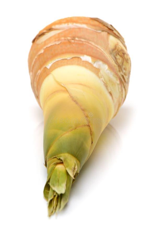 I germogli di bambù freschi del ¼ Œ del ï del germoglio di bambù o i germogli di bambù sono i tiri commestibili immagini stock libere da diritti