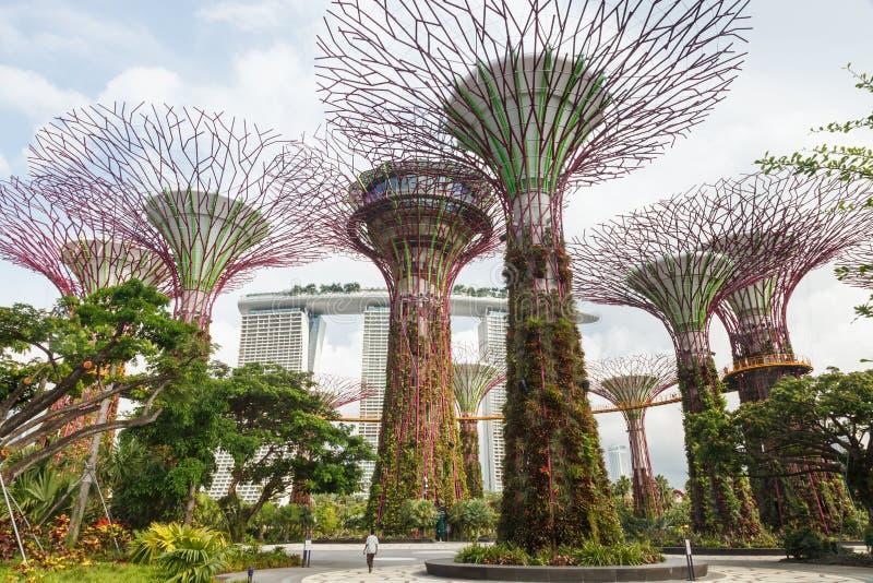 I giardini di Singapore dalla baia fotografia stock libera da diritti