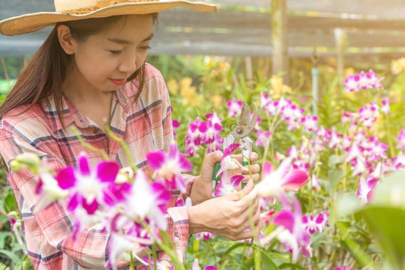 I giardinieri femminili portano una camicia di plaid e portano un cappello Mani che tengono le forbici per il taglio delle orchid fotografia stock libera da diritti