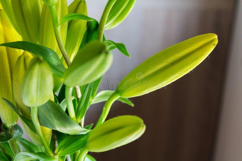I gigli fiorisce la fioritura immagine stock