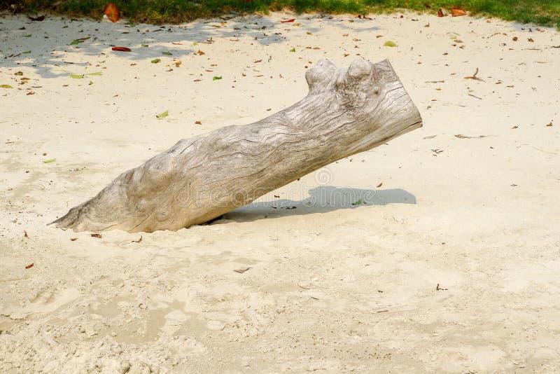 I grandi ceppi sulla spiaggia alla Tailandia fotografia stock