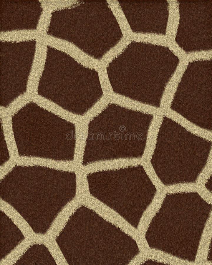 I grandi punti della giraffa mettono la pelliccia in cortocircuito fotografie stock