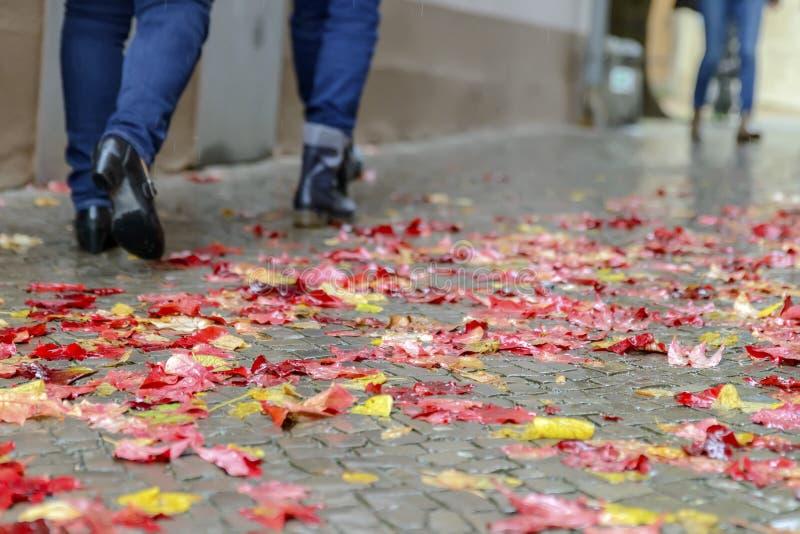 I höst promenerar folket i regnet, de härliga röd-guling sidorna arkivbild