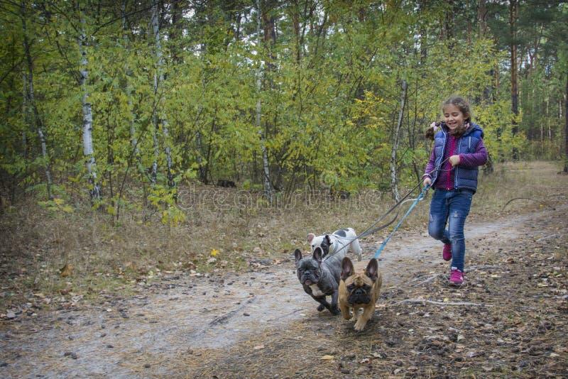 I höstskogen spelar en liten flicka med tre franska tjurar fotografering för bildbyråer