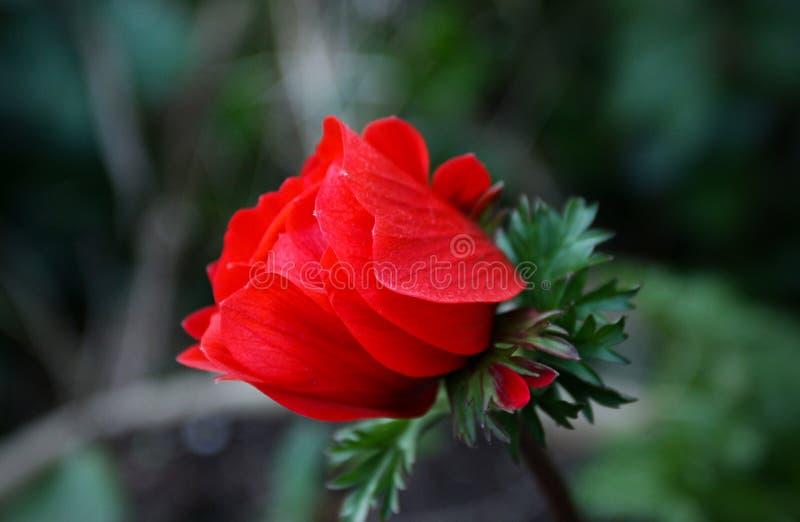 I heder av skönhet och fät royaltyfria bilder