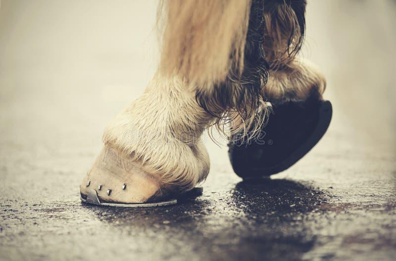 I hoofs con i ferri di cavallo immagini stock libere da diritti