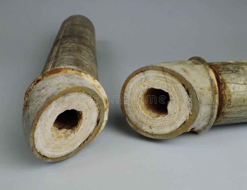 I latti di calce inducono i tubi ad ostruire e decomporrsi immagini stock