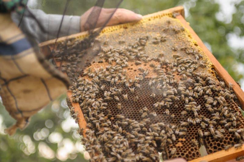 I lavoro manuali del ` s dell'apicoltore con le api e le api sull'arnia e nella natura Strutture con miele da un alveare fotografie stock