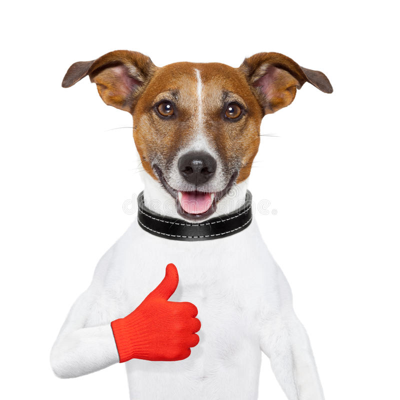 I like dog. With a thumb up royalty free stock image
