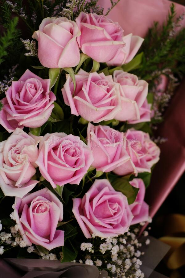 A bouquet of pink roses with white little flowers. I like taking image photos  and complete this picture royalty free stock images