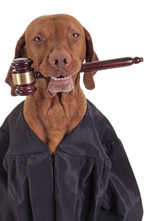 ` I ll ist der Richter von dem stockfotografie