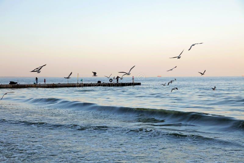 I lotti dei gabbiani che sorvolano i pescatori della costa di mare pescano il pesce immagini stock