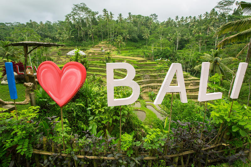 I Love Bali text written on the green rice terraces. Indonesia stock images