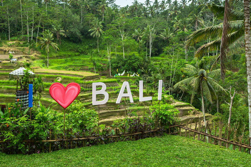 I Love Bali text written on the green rice terraces. Travel. I Love Bali text written on the green rice terraces royalty free stock images