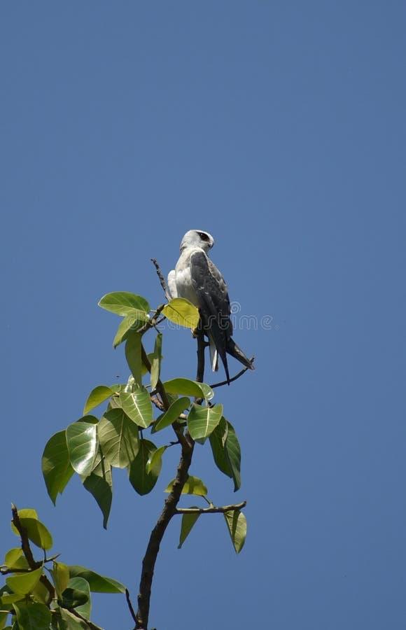 I love this bird royalty free stock image