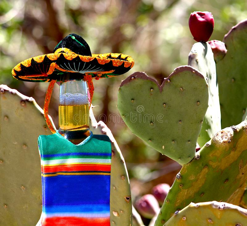 I love Mexico.  Beer bottle and prickly pear cactus heart. stock photos