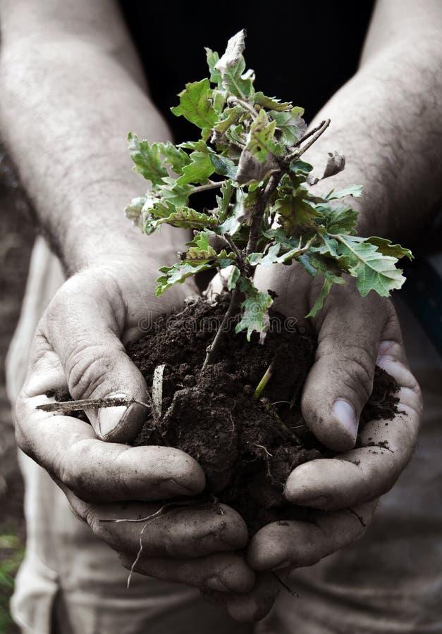 Download I love nature stock image. Image of soil, trees, bush - 26898621