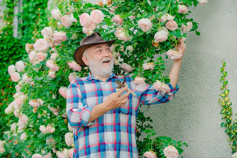 I love our moments in the countryside - remember time. Planting flowers. Happy farmer in cowboy hat having fun on field. Gardening - Grandfather gardener in stock image