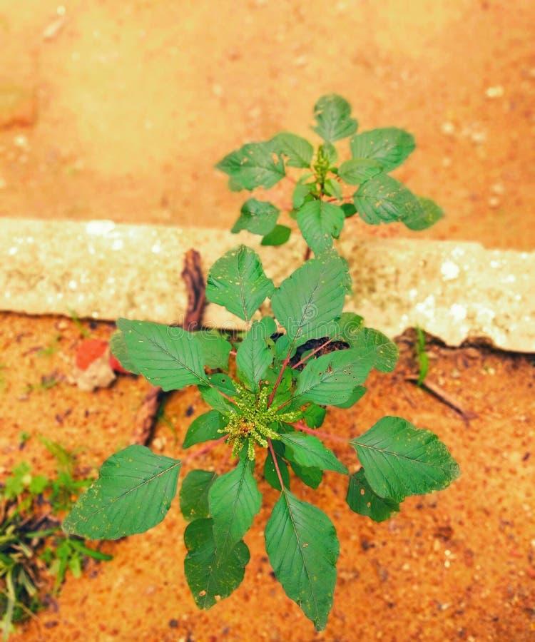 I LOVE PLANTS. Nature, good, mornings, sunrise royalty free stock photos