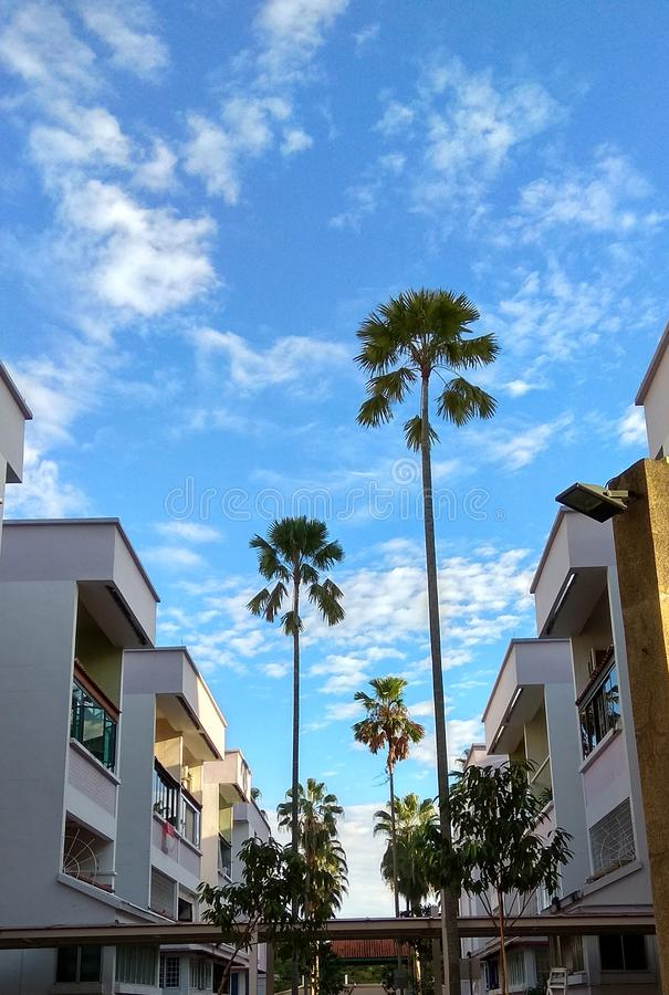I Love Singapore Big palm trees center of the city. I love Singapore Big trees center of the city Beautiful sky good weather clouds stock photography