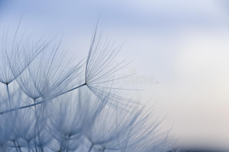 Download I'm blue stock image. Image of botanical, decoration - 24882651
