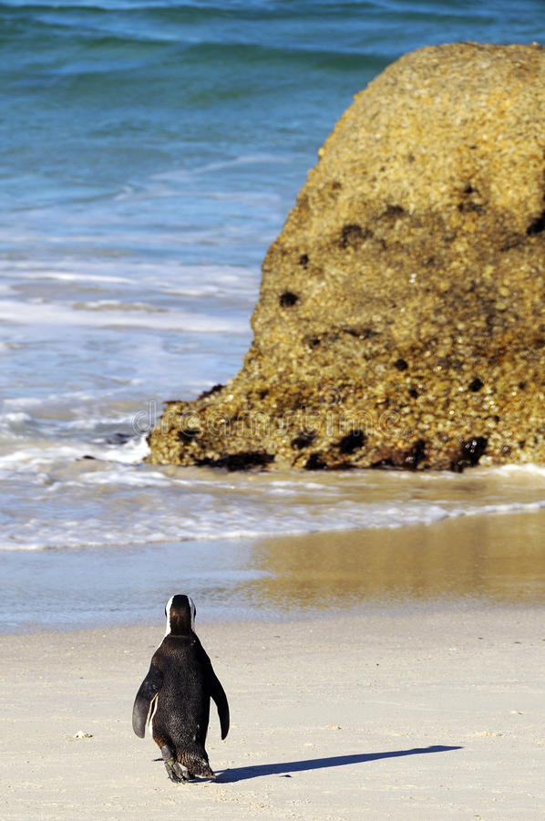 I'm going to have a bathe. This picture it was taken in South Africa, Boulders beach royalty free stock image