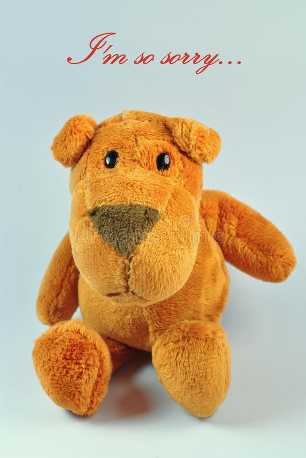 I'm So Sorry. Dog stuffed toy with I'm so sorry message. Note: Message can be edited royalty free stock photos