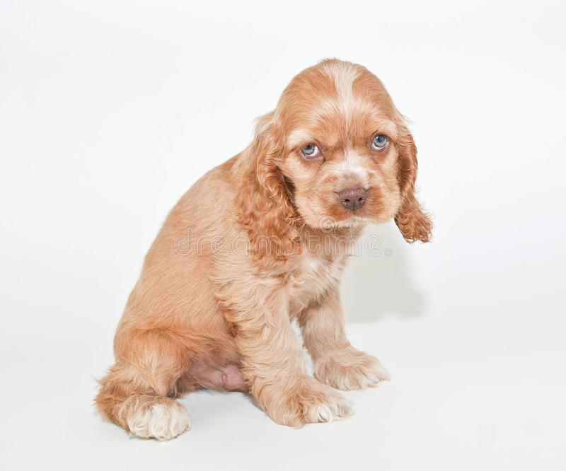 Im sorry stock photo image of expression puppy cute 37622314 download im sorry stock photo image of expression puppy cute voltagebd Images