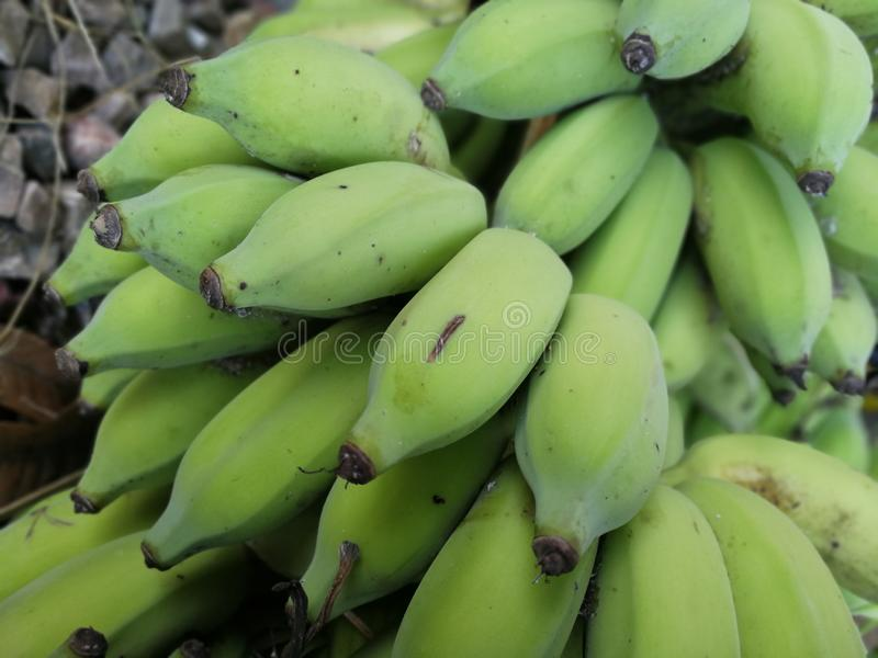 I mazzi crudi della banana mettono sulla terra immagine stock libera da diritti