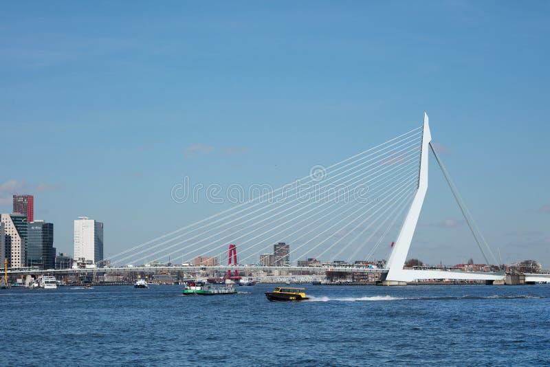 I 800 metri Erasmusbrug iconico lungo un giorno soleggiato, Rotterdam, Paesi Bassi fotografia stock libera da diritti
