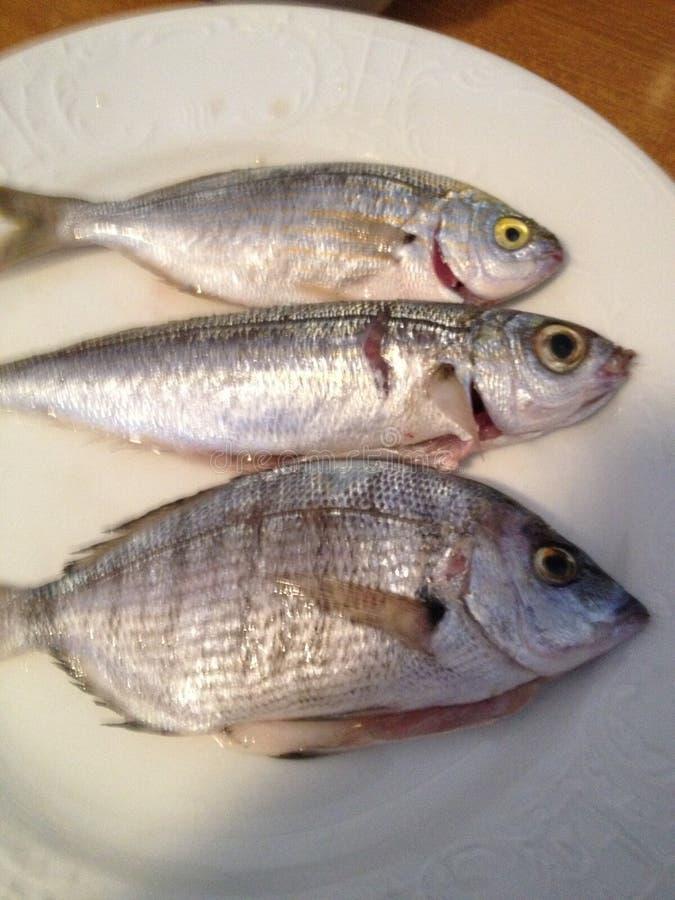I miei pesci immagine stock libera da diritti