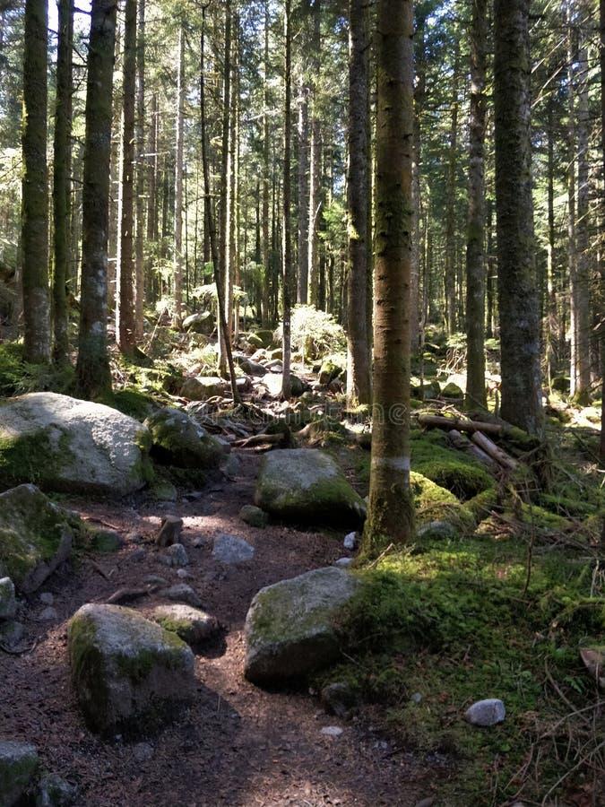 I mitt av skogen arkivfoton