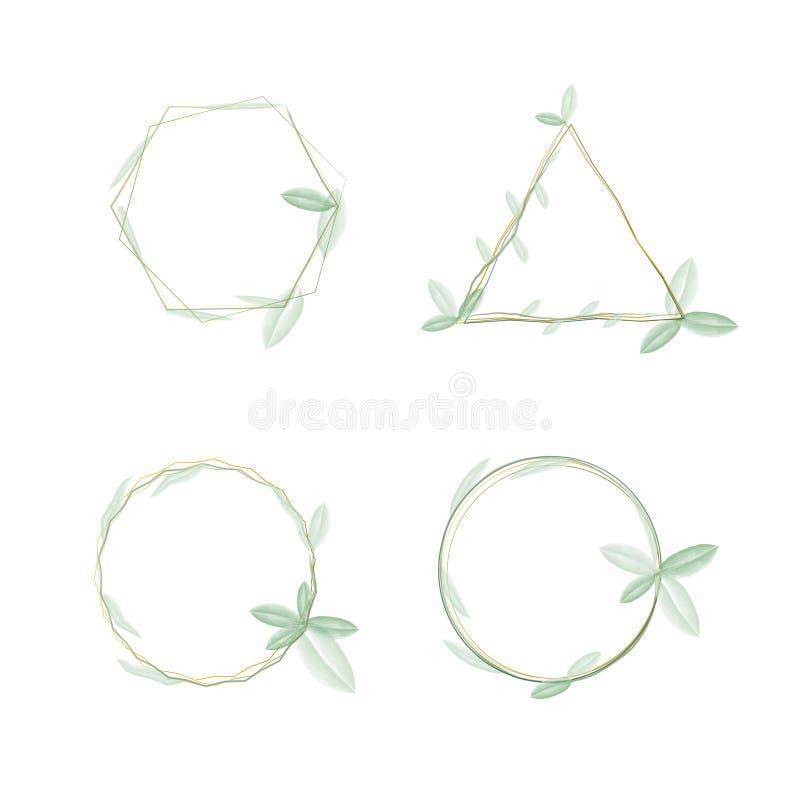 I molti forma del telaio rampicante delle piante dell'acquerello con il vettore verde chiaro di colore, forma quadrata del cerchi illustrazione vettoriale