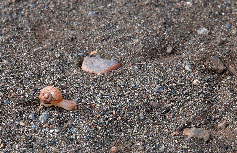 I movimenti striscianti della lumaca lungo la sabbia fotografia stock