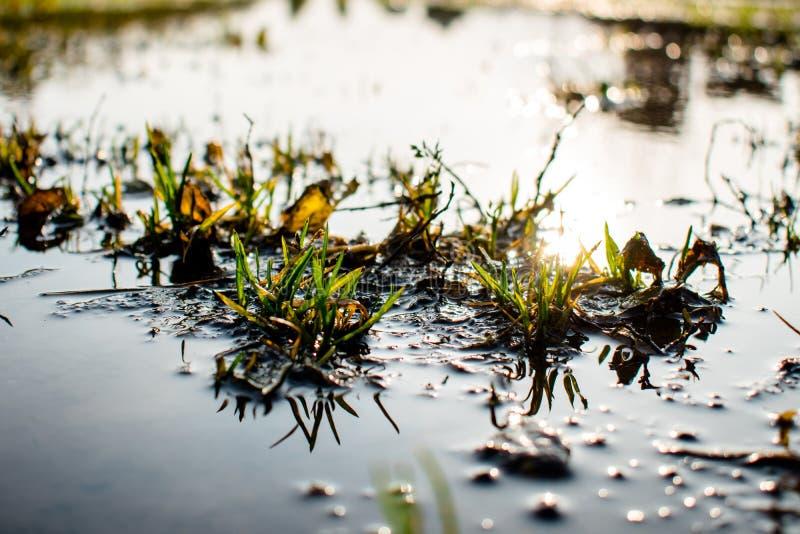 I mucchi di erba nell'acqua e nel sole abbagliano fotografia stock libera da diritti