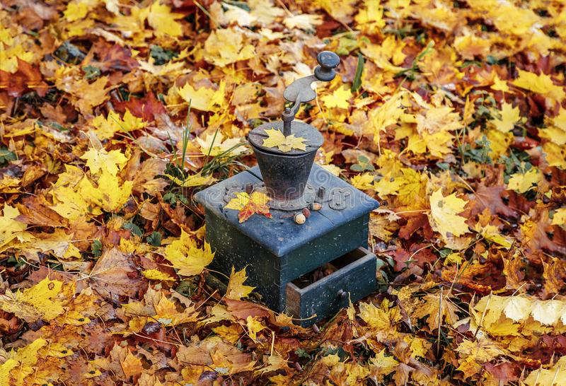I mulini di caffè stanno in foglie di autunno fotografia stock