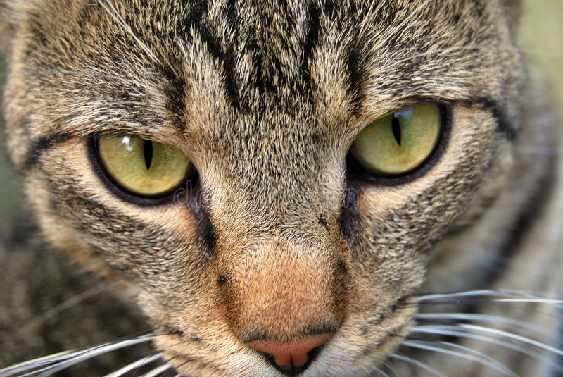 I nostri animali domestici fotografie stock