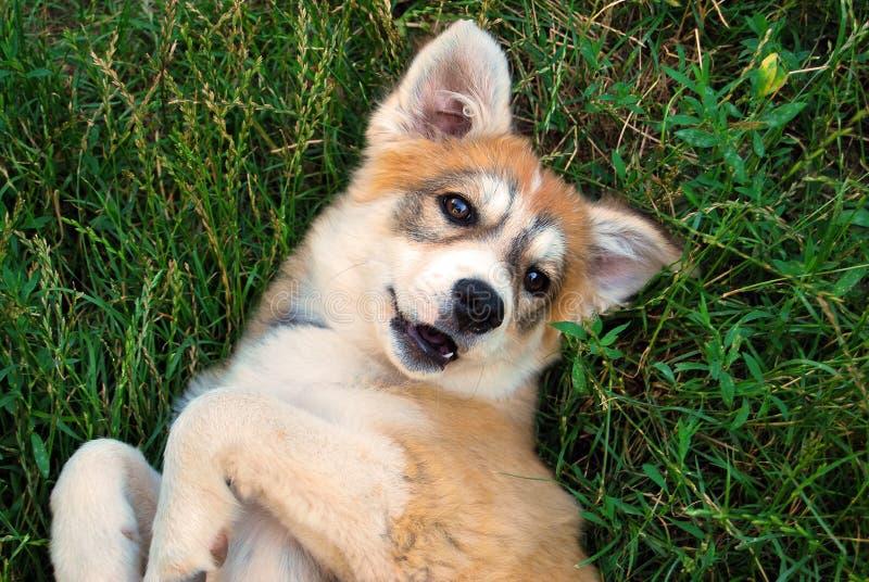 I nostri animali domestici fotografie stock libere da diritti