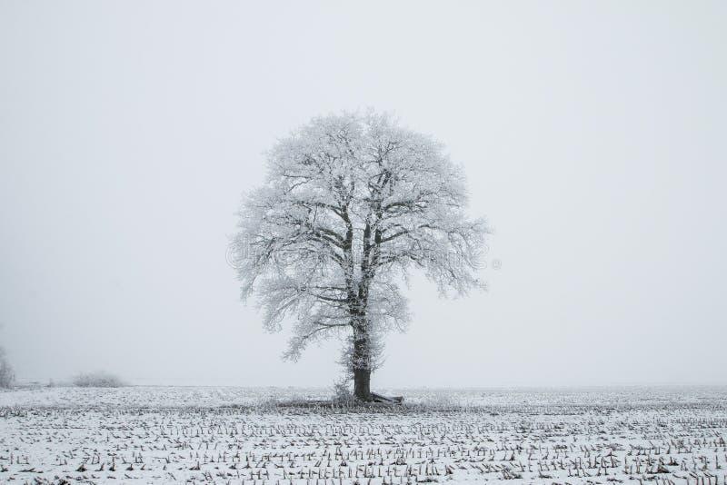 I Paesi Bassi, paesaggi e mulini nell'orario invernale fotografia stock