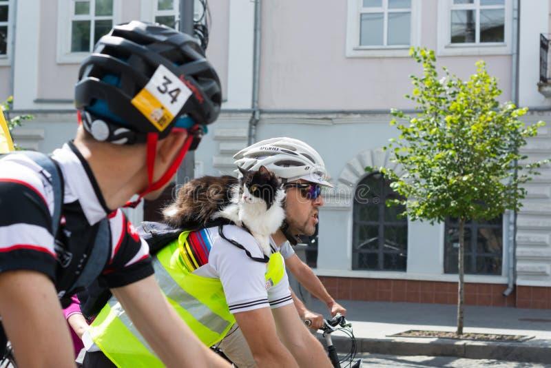 I partecipanti della corsa della bici prestano attenzione al fatto che il gatto partecipa alla corsa, sulla t fotografie stock libere da diritti