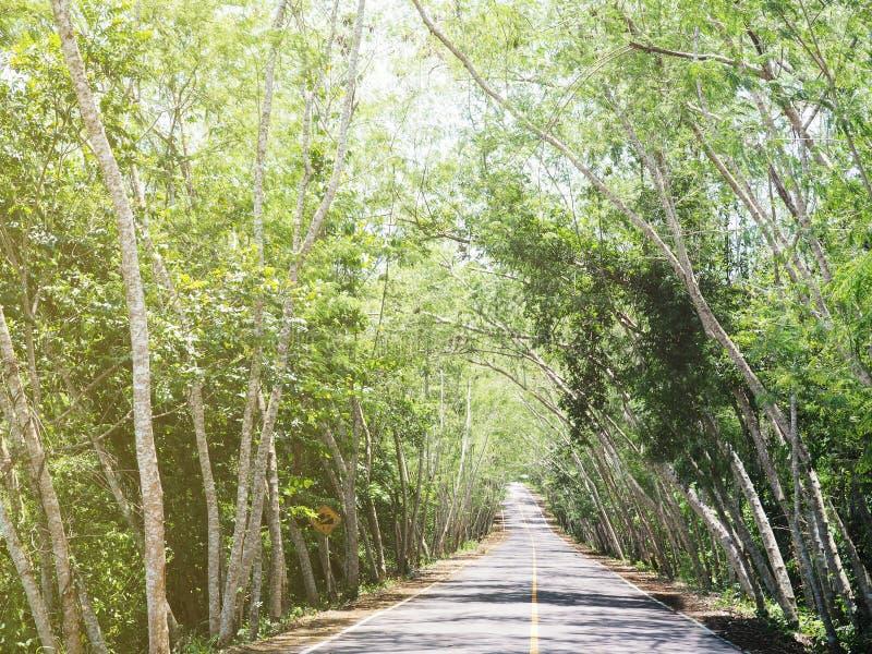 I passaggi della strada del pendio tramite il tunnel dell'albero fotografie stock libere da diritti