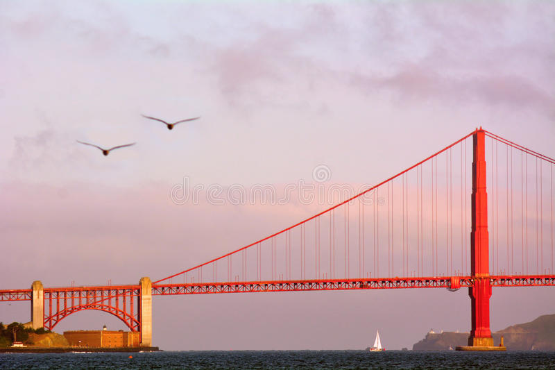 I pellicani sorvolano golden gate bridge a San Francisco, CA immagini stock
