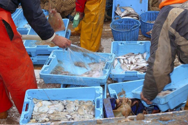 I pescatori passa l'attaccare di pesci di funzionamento alla piattaforma di barca fotografie stock libere da diritti