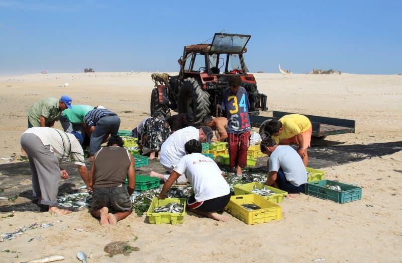 I pescatori stanno ordinando la cattura dei pesci, Portogallo fotografia stock libera da diritti