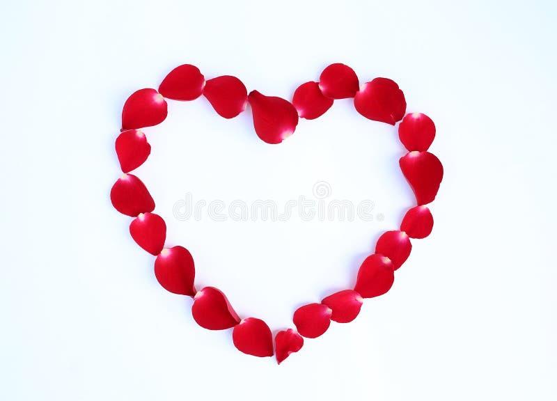 I petali della rosa rossa fioriscono nella forma del cuore isolata su fondo bianco fotografie stock