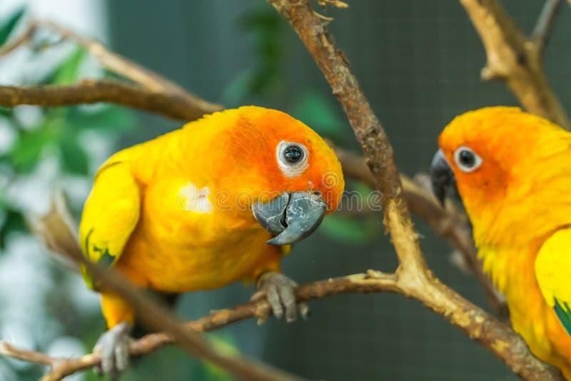 I piccioncini sull'albero immagini stock libere da diritti