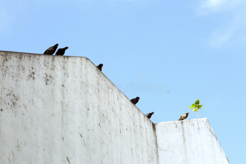 I piccioni neri riposano sul eave fotografia stock libera da diritti