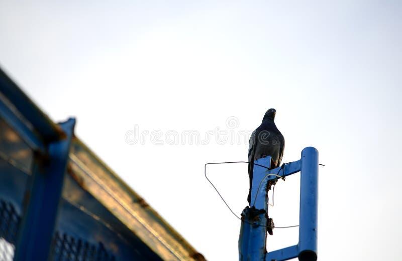 I piccioni stanno stando fotografia stock