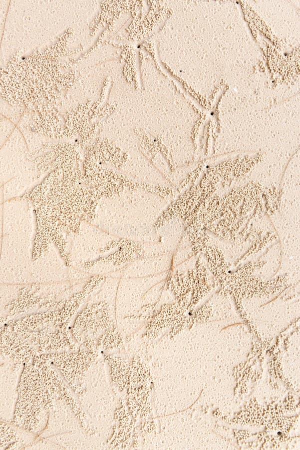 I piccoli granchi fanno le tane nella sabbia immagine stock